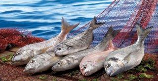 Sambacıların sofralarını, Türk su ürünleri ve hayvansal mamulleri süsleyecek