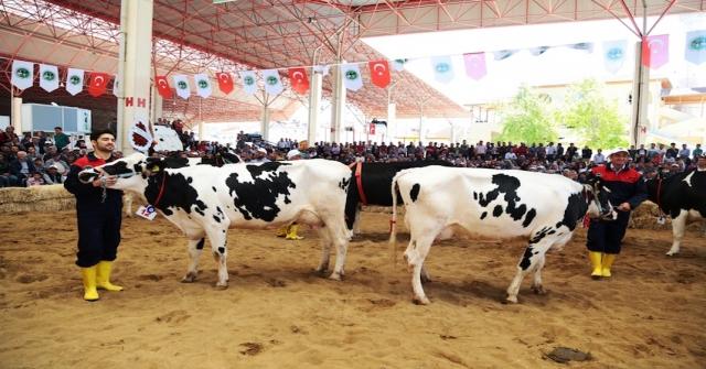 4. Teke Yöresi Tarım Ve Hayvancılık Fuarına Doğru