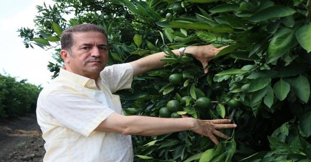 Akdeniz Meyve Sineğiyle Mücadelede Korku Devam Ediyor