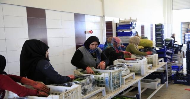 Antalya Toptancı Hali Rekora Doymuyor