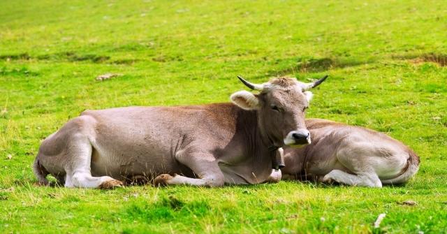 İncefikir: Türkiye Hayvan Üretiminde Gelişmiş Ülkelerin Gerisinde