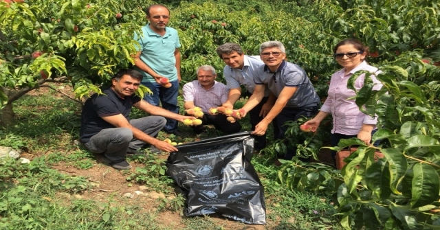 Akdeniz Meyve Sineği İle Poşetli Mücadele