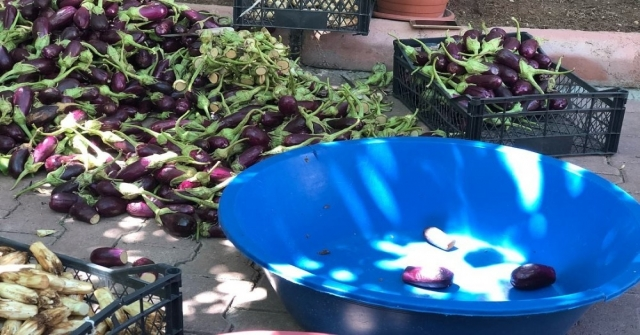 Kiliste Kurutmalık Patlıcanlar Oyulmaya Başlandı