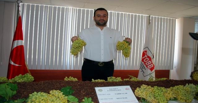 Salihli'de ilk üzüme 170 TL