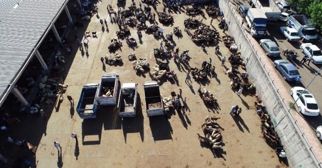 Diyarbakırda Kurbanlıklar Zararına Satılıyor