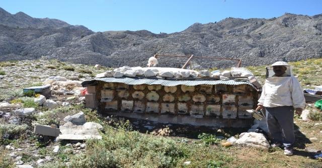 Aksekinin Meşhur Çimi Yaylası Balı İklim Kurbanı Oldu