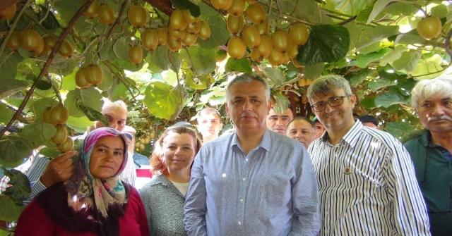 Türkiyenin İlk Kivi Hasadı Silifkede Yapıldı
