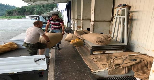 Üretici, Fındık Fiyatlarının Yükselmesini Bekliyor