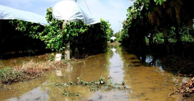 Sarıgölde Dolu Ve Fırtına Zarara Yol Açtı