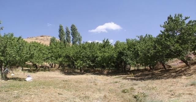 2400 Rakımlı Başkalede Fındık Ağaçlarından Ürün Aldı