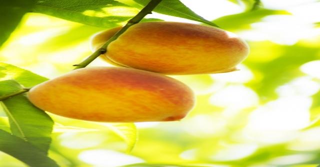 Yaş Meyve Sebze Ve Mamulleri İhracatçıları Dört Koldan Tanıtım Atağına Kalktı