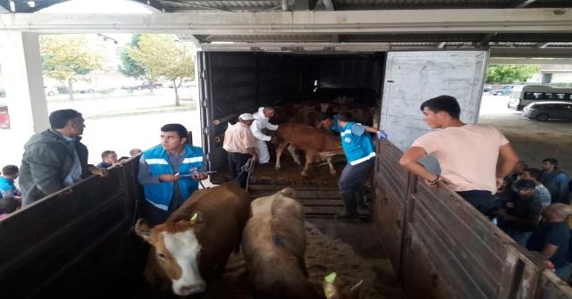 Pazarlarda 8 Genç Çiftçiye 5Er Adet Büyükbaş Hayvan