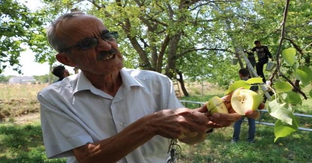 Akdeniz Sineği Hastalığı Niğdeye Sıçradı