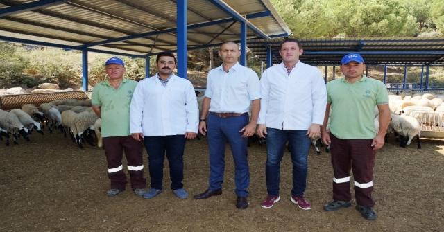 Kamunun Tek Sakız Koyunu Çiftliğinde İşler Yolunda Gidiyor