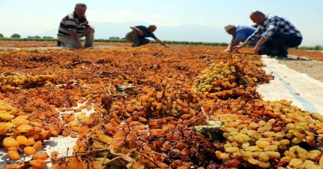 Tariş Üzüm Alım Avans Fiyatını Artırdı