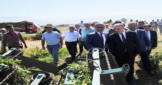 Osmaniyede 51 Bin Ton Yer Fıstığı Rekoltesi Bekleniyor