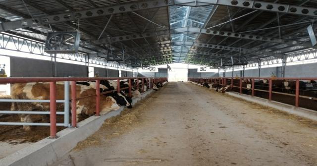 Antalyada Desteklemeyle 400 Başlık Çiftlik Kuruldu