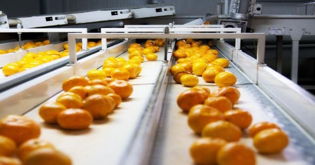 Rusyaya Yaş Meyve Sebze İhracatı 410 Milyon Doları Aştı
