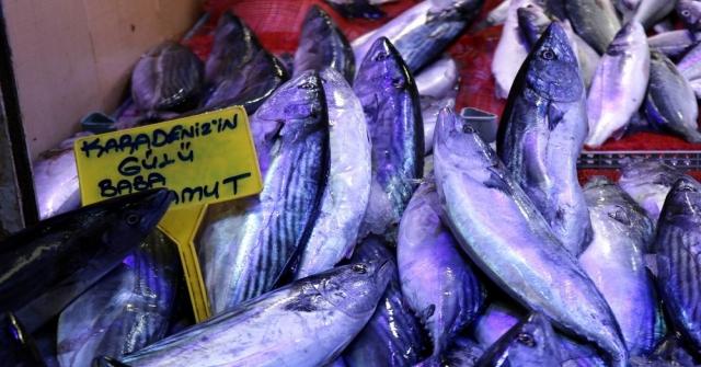 Balık, Karadenizden Ege Ve Akdenize Göç Ediyor