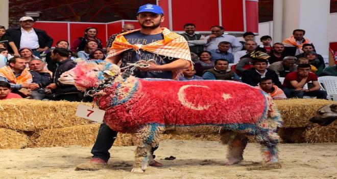 Yörük Türkmenler fuarda bu yıl kültürlerini tanıtacak