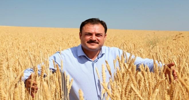 Bitliste Buğday Hasadı Başladı