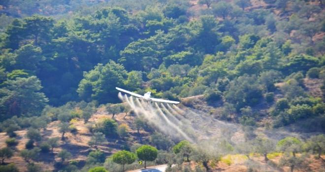 İlk Gün 23 Bin Dekar Zeytinlik Havadan İlaçlandı