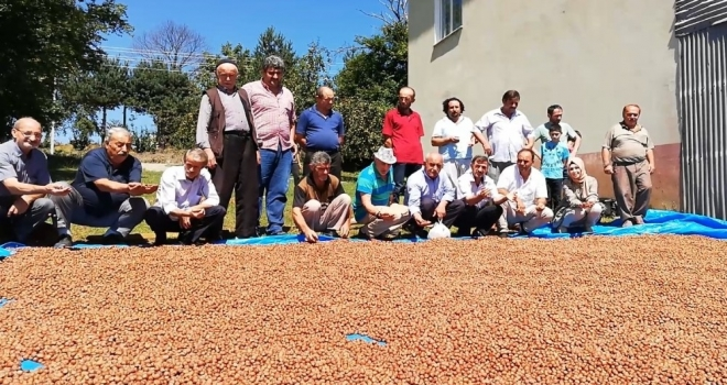 Bafralı Fındık Üreticileri 15 Lira Fiyat Bekliyor