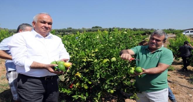 Başkandan Cezeryeli İhracatlık Limon Kesimi