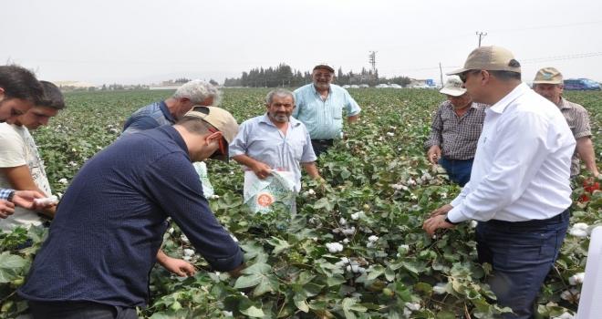 May Tohum, Yeni Pamuk Çeşitlerini Bereket Şenliğinde Çiftçilere Tanıttı