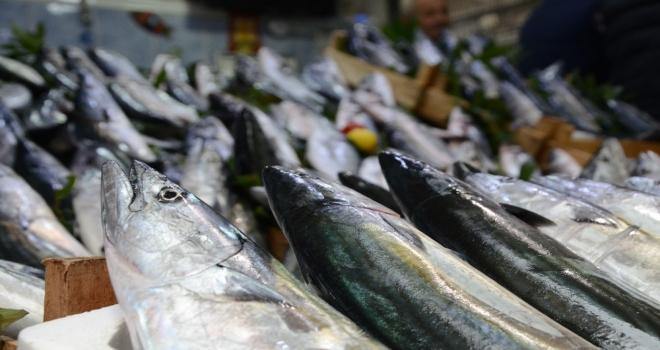 Türkiye Balığa Yöneldi, Palamut Fiyatı 3E Katlandı
