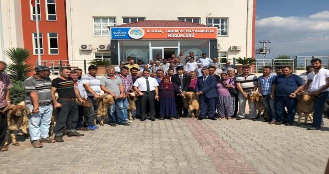 Osmaniyede Birlik Üyelerine Koç Dağıtımı Yapıldı
