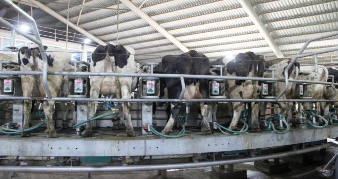 """Kendirlioğlu; """"Süt Fiyatları Arasındaki Dengesizliğe Müdahale Edilmelidir"""""""